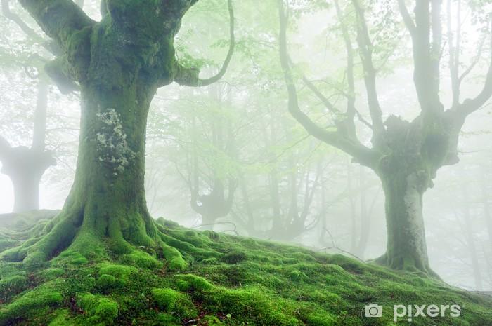 Naklejka Pixerstick Drzewa z żywych zielonych korzeni i mchu - Drzewa