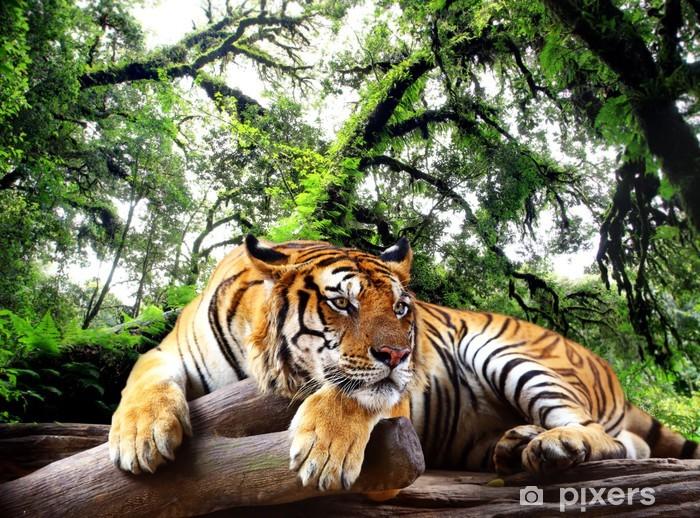 Masa Çıkartması Kaplan tropikal dökmeyen ormanda kaya üzerine bir şeyler arıyor -