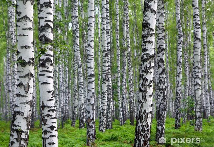 nice summer birch forest Pixerstick Sticker - Styles