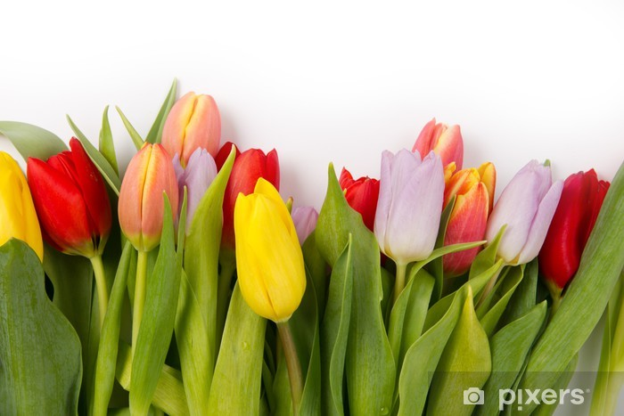 Vinyl-Fototapete Tulip bouquet - Internationale Feste