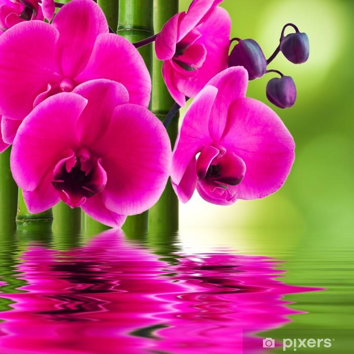 Papier peint vinyle Fleur d'orchidée avec le bambou et la réflexion dans l'eau - Thèmes