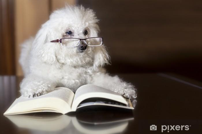 Fototapeta winylowa Pudel czyta książkę - Edukacja