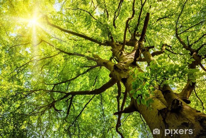 Pixerstick Sticker De zon schijnt door de boomtoppen - Thema's