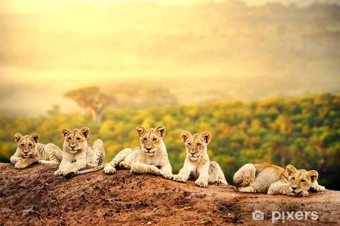 Lion cubs waiting together. Pixerstick Sticker - Themes