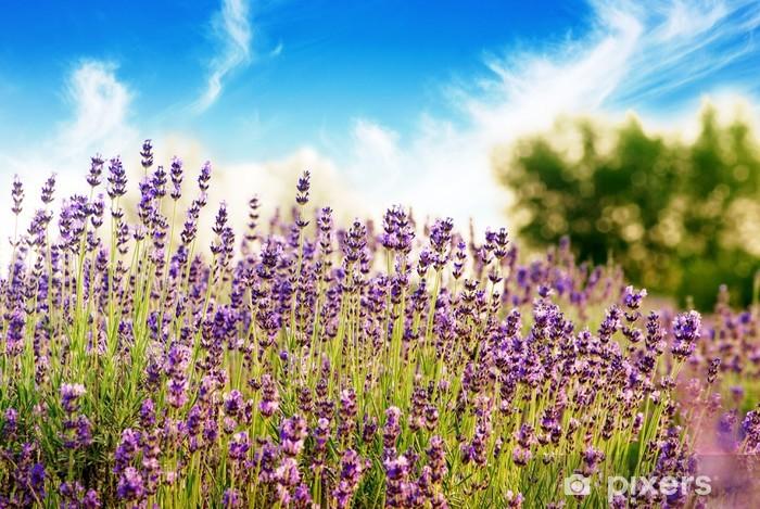Vinyl-Fototapete Schönes Detail eines Lavendelfeld mit blauem Himmel - Jahreszeiten