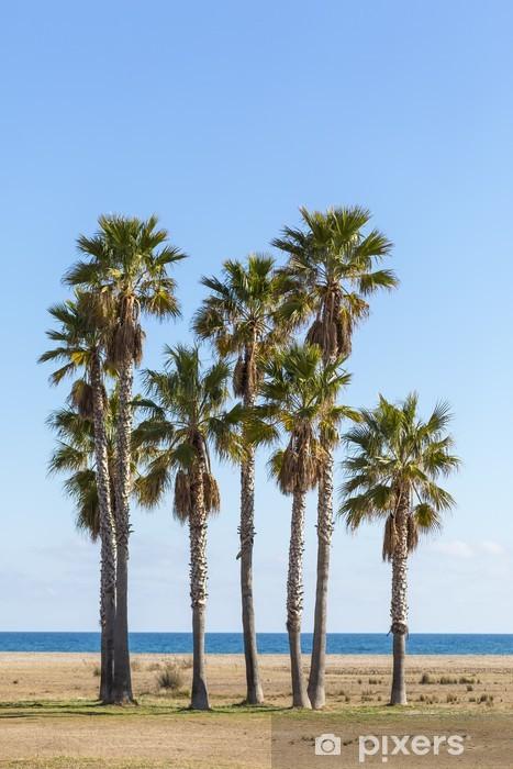 Papier peint vinyle Arbre palmier - Vacances