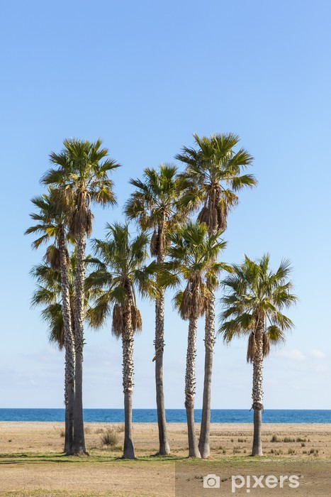 Palm Tree Vinyl Wall Mural - Holidays