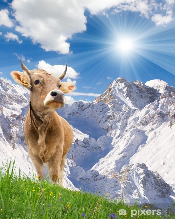 Pixerstick Aufkleber Zwei Kühe - Naturwunder