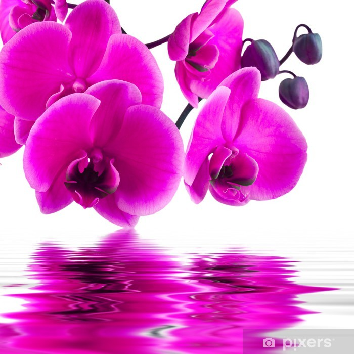 orchid flower in closeup with reflection in water Vinyl Wall Mural - Themes