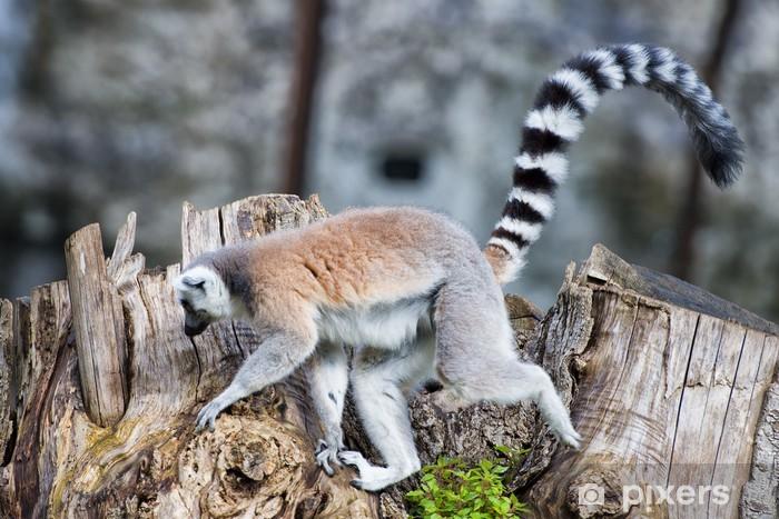 Papier peint vinyle Singe lémurien en sautant - Mammifères