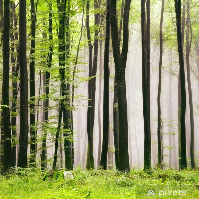 Fotomural Estándar Forest spring - iStaging
