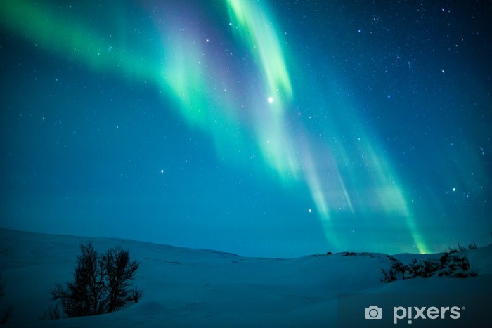 Fotomural Estándar Luces del Norte (Aurora borealis) por encima de la nieve - Temas