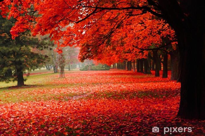 Papier peint vinyle Automne rouge dans le parc - Destin