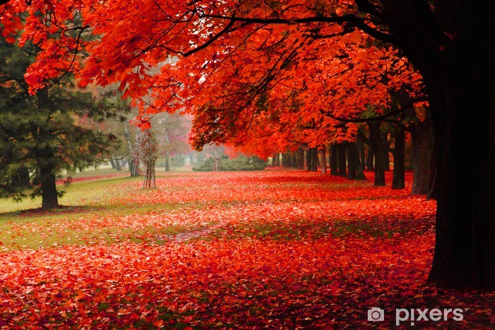 red autumn in the park Vinyl Wall Mural - Destinations