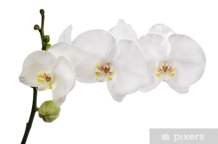 Nálepka Pixerstick Velké bílé izolované tři květy orchidejí na pobočce - Nálepka na stěny
