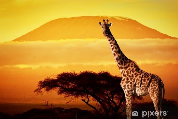 Vinilo Pixerstick Jirafa en la sabana. Monte Kilimanjaro al atardecer. Safari - Temas