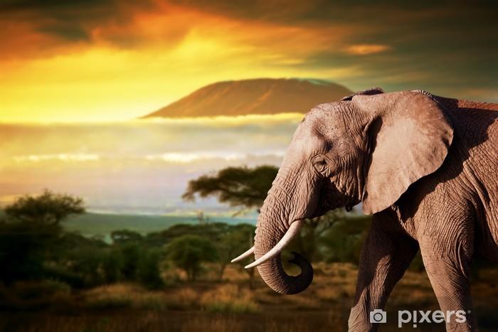 Nálepka Pixerstick Slon na savaně. Kilimandžáro při západu slunce. Safari - Témata