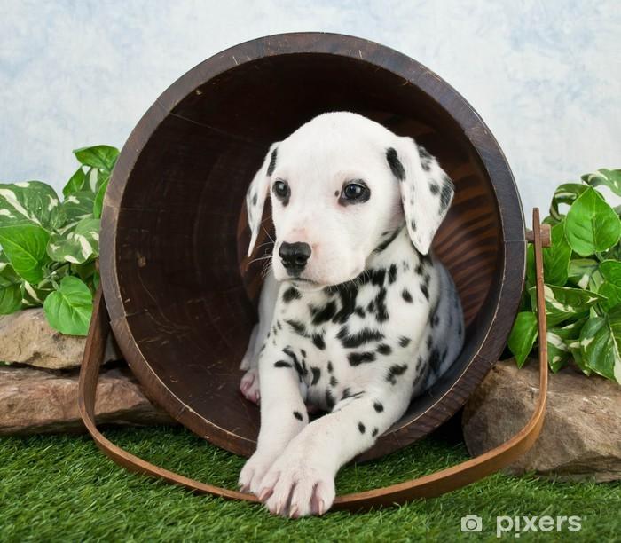 Plakat Puppy Dalmacji - Ssaki