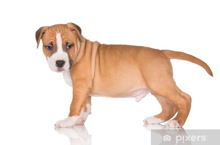 Aufkleber American Staffordshire Terrier Welpen Pixers Wir Leben Um Zu Verandern