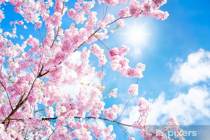 Kirschbaumblüte Pixerstick Sticker - Cherry trees