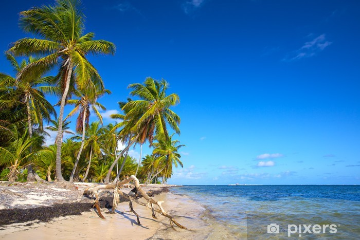 Untouched tropical beach with palm trees in Dominican Republic Vinyl Wall Mural - Palm trees