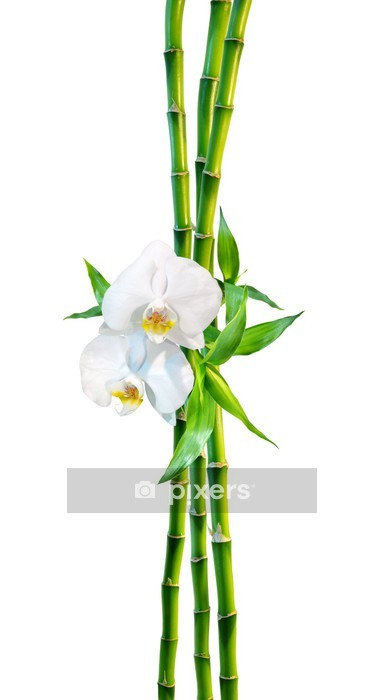 Vinilo para Pared Pareja de concepto - dos flores de las orquídeas y los brotes de bambú - Vinilo para pared