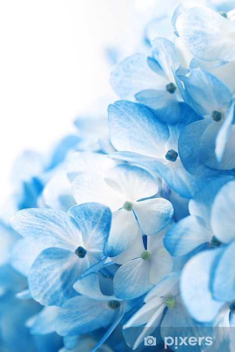 Hydrangea flowers background Pixerstick Sticker - Flowers