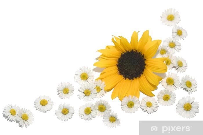 Vinyl Fotobehang Grens madeliefjes zonnebloem - Bloemen