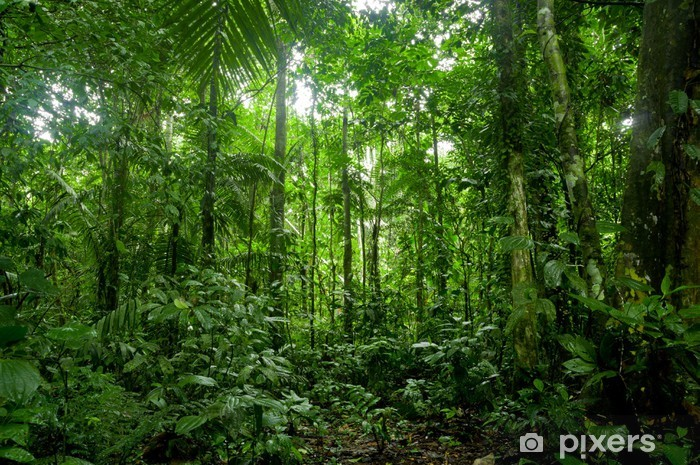 Fototapeta winylowa Tropikalne lasy deszczowe krajobraz, amazon - Tematy