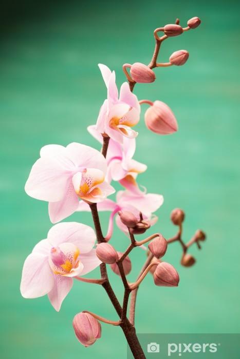 Papier peint vinyle Orchidée - Thèmes