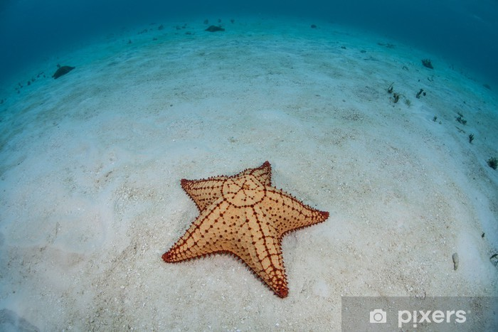 Caribbean seastar Pixerstick Sticker - Aquatic and Marine Life