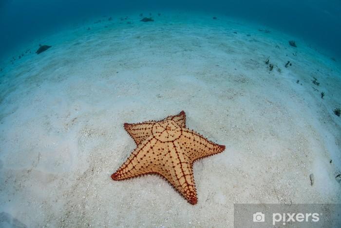 Vinilo Pixerstick Estrella de mar del Caribe - Animales marinos