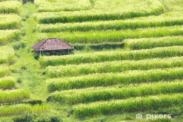 Naklejka Pixerstick Pole Bali Jatiluwih Rice Tarasy - Azja