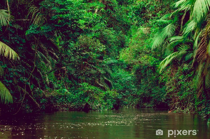 River deep in jungle forest. Amazonas composition. Self-Adhesive Wall Mural - Themes