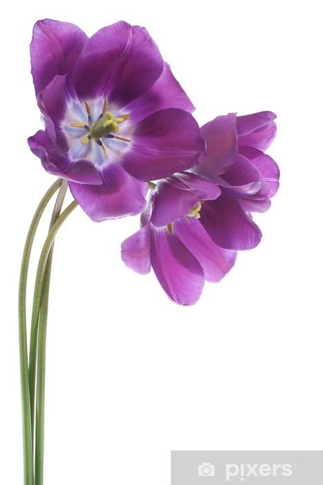 Sticker Pixerstick Tulipe - Fleurs