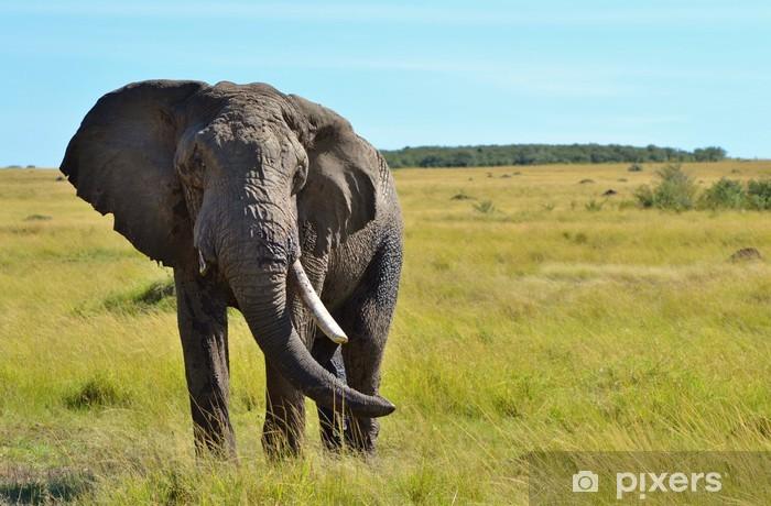 Sticker Pixerstick Afrique elephant - Thèmes