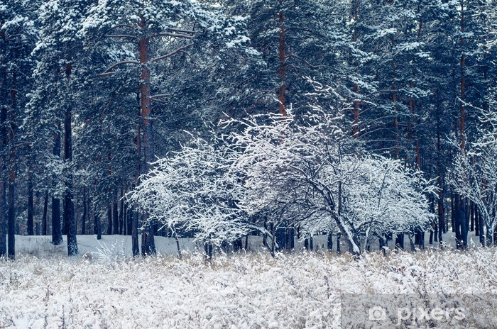 Fototapete Winter Wald Pixers Wir Leben Um Zu Verandern