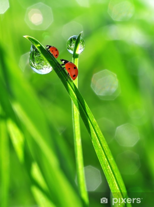 fresh morning dew and ladybirds Pixerstick Sticker -
