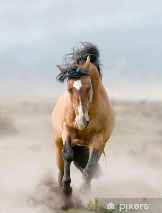 bay stallion in dust Pixerstick Sticker - Themes