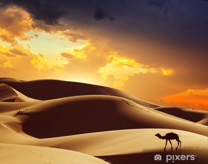 Papier peint vinyle Chameau dans le désert du Sahara, le Maroc - Thèmes