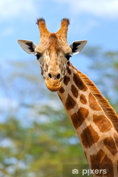 Pixerstick Sticker Giraffe - Thema's