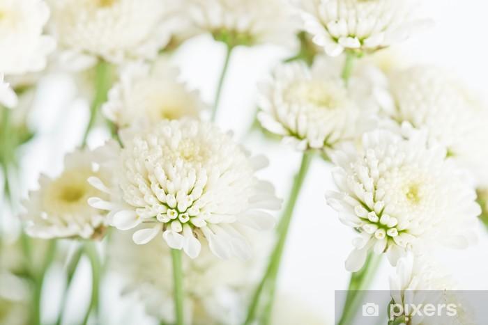Naklejka Pixerstick Bukiet chryzantem - Kwiaty
