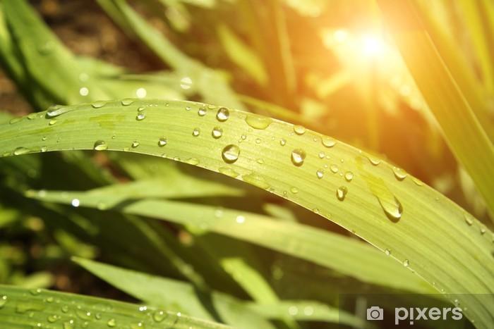 Sticker Pixerstick Rain drops - Saisons