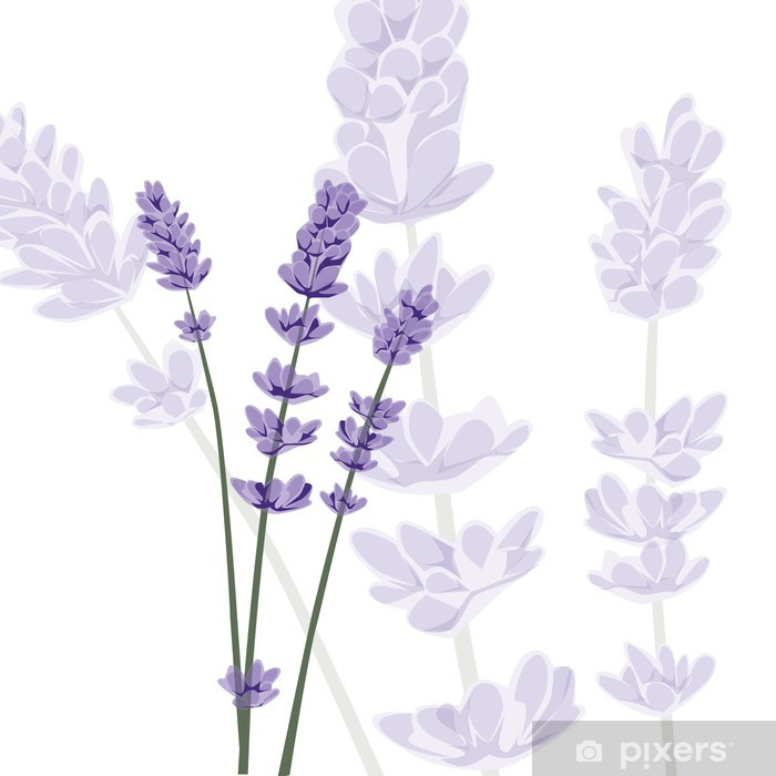 Lavender on isolated background, vector Pixerstick Sticker - Flowers