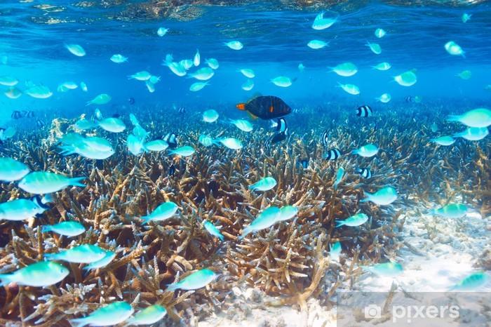 Fotomural Estándar Arrecife de coral en Maldivas - Arrecife de coral