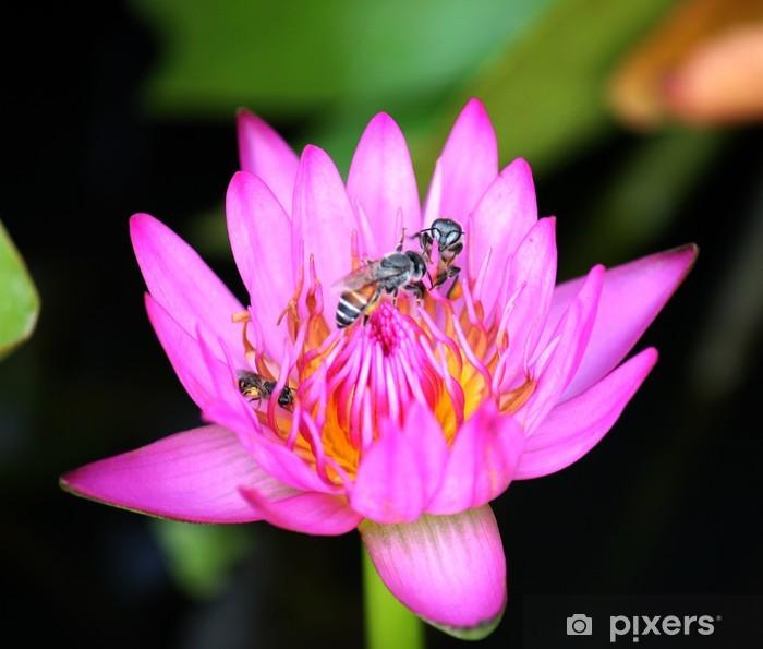 Papier peint vinyle Lotus - Fleurs