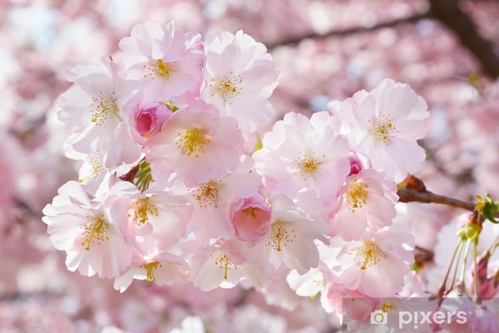 Papier peint vinyle Printemps rameau de fleurs sur le fond avec la fleur rose - Saisons