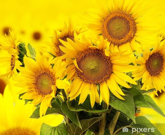 sunflowers on a field Pixerstick Sticker - Themes