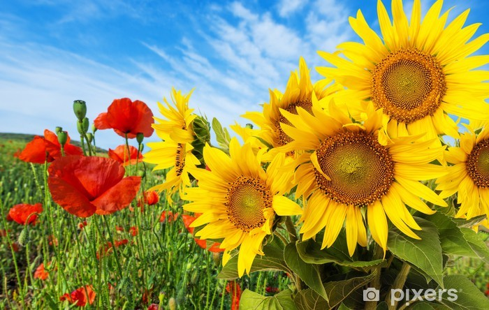 sunflowers and poppies Pixerstick Sticker - Themes