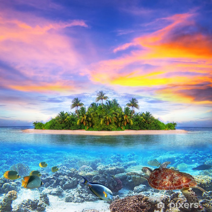 Tropical island of Maldives with marine life Poster - Fishes